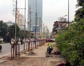 Từ 1/8 Hà Nội sẽ trồng lại cây trên đường Nguyễn Chí Thanh