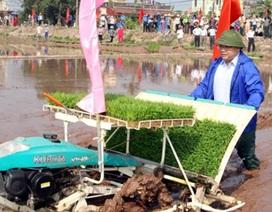 Tân Bí thư cùng Chủ tịch Hà Nội xuống đồng cấy lúa