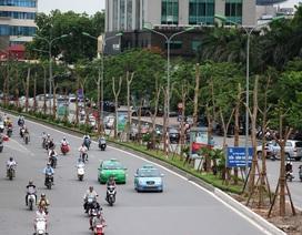 Chủ tịch Hà Nội lý giải việc trồng phượng trên các tuyến phố
