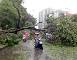 Sở Xây dựng Hà Nội lên tiếng về việc gần 3.000 cây xanh gãy đổ trong bão