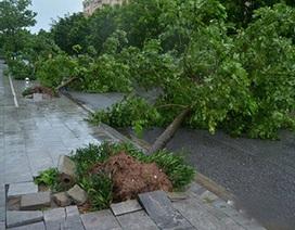 Hà Nội công bố tên các đơn vị trồng cây ẩu, bị đổ trong bão số 1