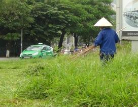 3 cấp độ cắt cỏ trên các tuyến đường Thủ đô