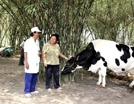 Tháng 1/2015, Vinamilk thu mua sữa bò tươi nguyên liệu tăng gần 22%