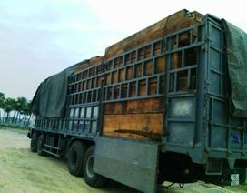 Xe chở gỗ quá tải gần 200% không bị hạ tải vẫn được lưu thông