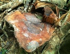 """Vụ rừng """"đổ máu"""": Phát hiện 2 đối tượng phá rừng"""