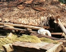 Hàng trăm ngôi nhà bị gió lốc quật đổ, tốc mái