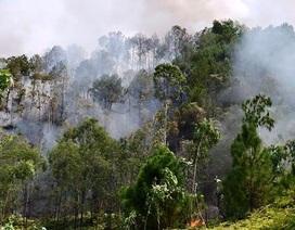 Rừng keo bị thiêu rụi, rừng thông bốc cháy