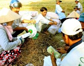 Thương lái về vùng sâu, vùng xa mua lúa