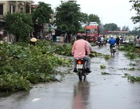 Bài học còn có tính thời sự từ trận bão số 3 năm 2010