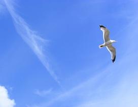 Cánh chim trở về