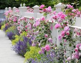 Khu vườn của riêng em