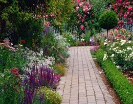 Mảnh vườn tí hon