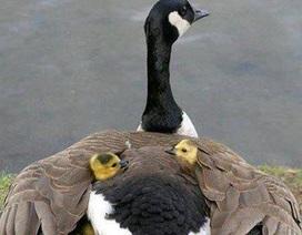 Mẹ ơi, hãy cứu con!