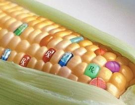 """Thực phẩm biến đổi gen có thể lạc quan theo kiểu """"ăn 10 năm rồi, cứ ăn tiếp có sao""""?"""
