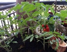 Chiều con, mẹ trồng vườn rau quả tí hon trên nóc nhà