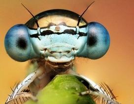 Ngỡ ngàng thế giới côn trùng dưới mưa tuyệt đẹp