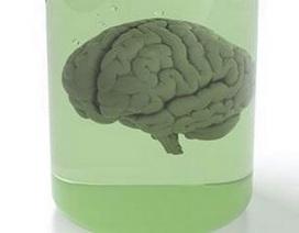 100 bộ não người bị biến mất bí ẩn khỏi trường Đại học
