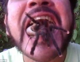 Kinh hãi người đàn ông ngậm đồng thời cả rắn và nhện độc vào miệng