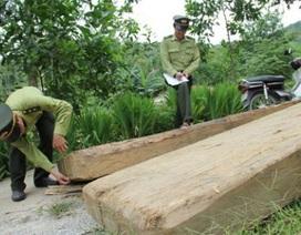Phạt tiền Bí thư Huyện ủy chứa gỗ lậu