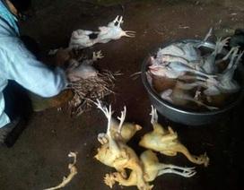 Lấy mẫu gà làm sẵn kiểm nghiệm chất nhuộm gây ung thư