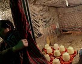 Trung Quốc: Thêm 2 trường hợp nhiễm H7N9 tại Thượng Hải
