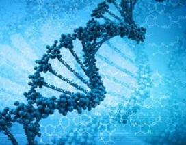 Phát hiện gen mới giúp khỏe tim và chống ung thư vú