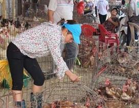 Khẩn cấp ứng phó với các chủng cúm H7N9 trên người