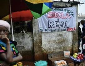 Số trường hợp nhiễm Ebola có thể lên đến1,4 triệu người