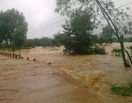 Bị mưa lũ cô lập, người dân phải leo cây tránh lũ