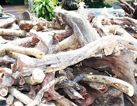 Xử phạt 3 người Trung Quốc thu mua trái phép gỗ quý