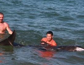 Cứu hộ cá heo dài 2m dạt vào bờ biển Nha Trang