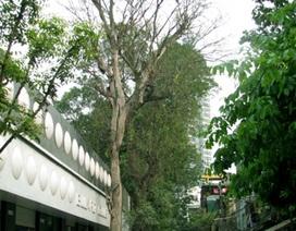 Hà Nội: Đóng đinh, đốt gốc để triệt hạ cây xanh