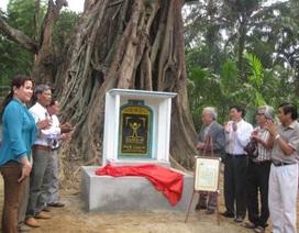 Công nhận cây di sản Việt Nam ở Quảng Ngãi