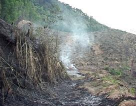 Dân đốt rẫy, cháy rụi 50ha rừng keo