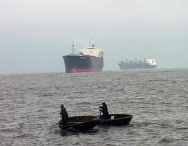 Tàu nghìn tấn không thể cập cảng do dân bắt tôm hùm trái phép