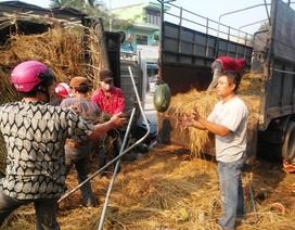 Dân giúp tài xế thu gom 10 tấn dưa hấu đổ ra đường