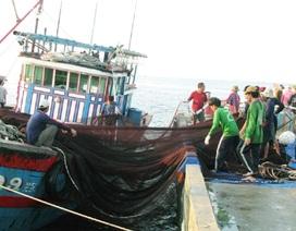 Ngư dân Việt vẫn vững vàng