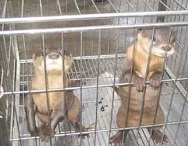 108 loài động vật hoang dã bị rao bán trên Internet tại Việt Nam