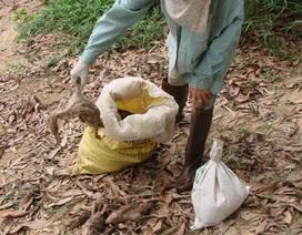 UBND tỉnh vào cuộc vụ gần 3.000 con vịt chết nghi do ô nhiễm