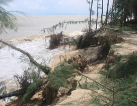 """Sóng biển """"bức tử"""" rừng dương bảo vệ làng chài"""