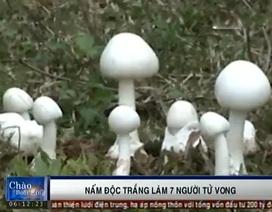 Nhận diện loại nấm độc trắng làm 7 người tử vong
