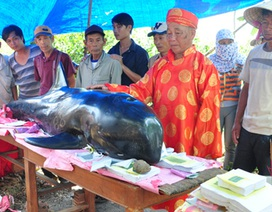 Chôn cất cá voi nặng 2 tạ bị dạt vào bờ biển