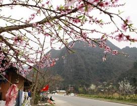 Bạt ngàn sắc hoa vùng biên viễn