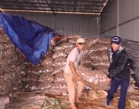 26 tấn khoai tây Trung Quốc nhiễm độc gấp 16 lần cho phép