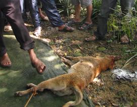 Hoảng hốt vì nạn chó, mèo nghi dại hoành hành