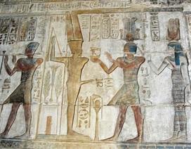 """Chuyện khó tin về loại rau """"ngự phẩm"""" khiến vua Ai Cập mê mẩn trồng đầy rẫy tại… Việt Nam"""