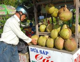 Sát Tết, giá dừa sáp từ 200.000 - 250.000 đồng/trái