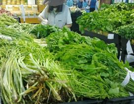 """Hợp tác xã rau sạch ở Hà Nội trà trộn rau """"bẩn"""" bán cho siêu thị"""