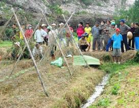 Gỡ lưới ngoài ruộng, một phụ nữ bị điện giật chết