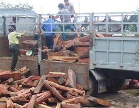 Lái xe bị phạt 74 triệu đồng vì vận chuyển gỗ trái phép